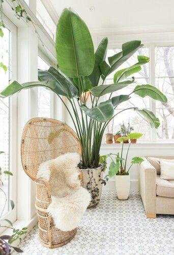 grote planten in woning zijn eyecatcher binnen woontrend urban jungle