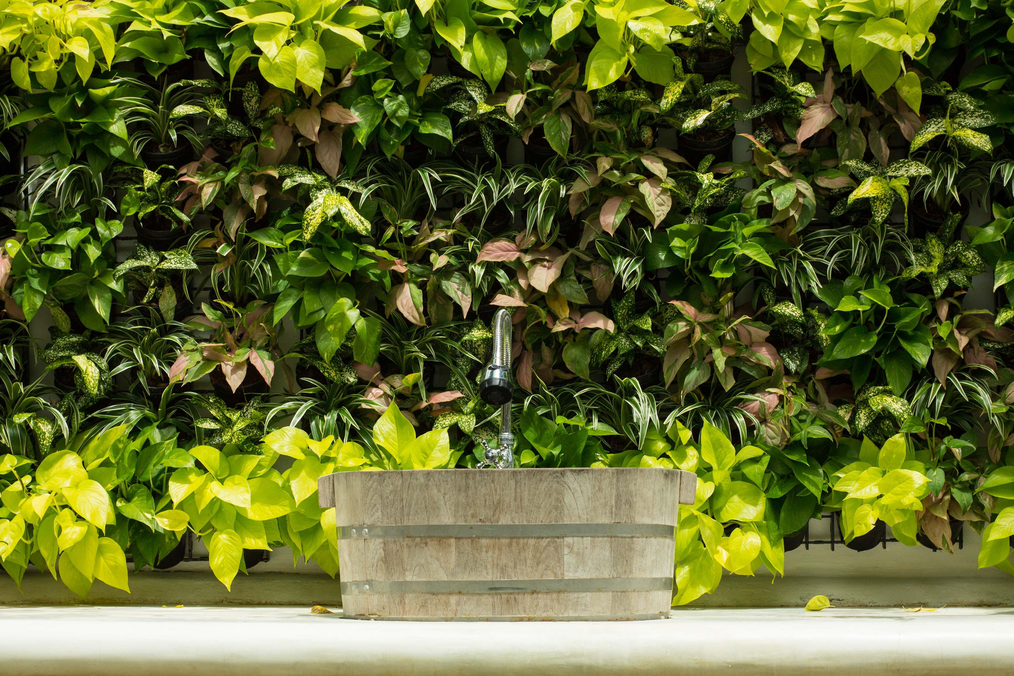Verticale Tuin Woonkamer : Verticale tuin zo maak je een verticale tuin binnen of buiten