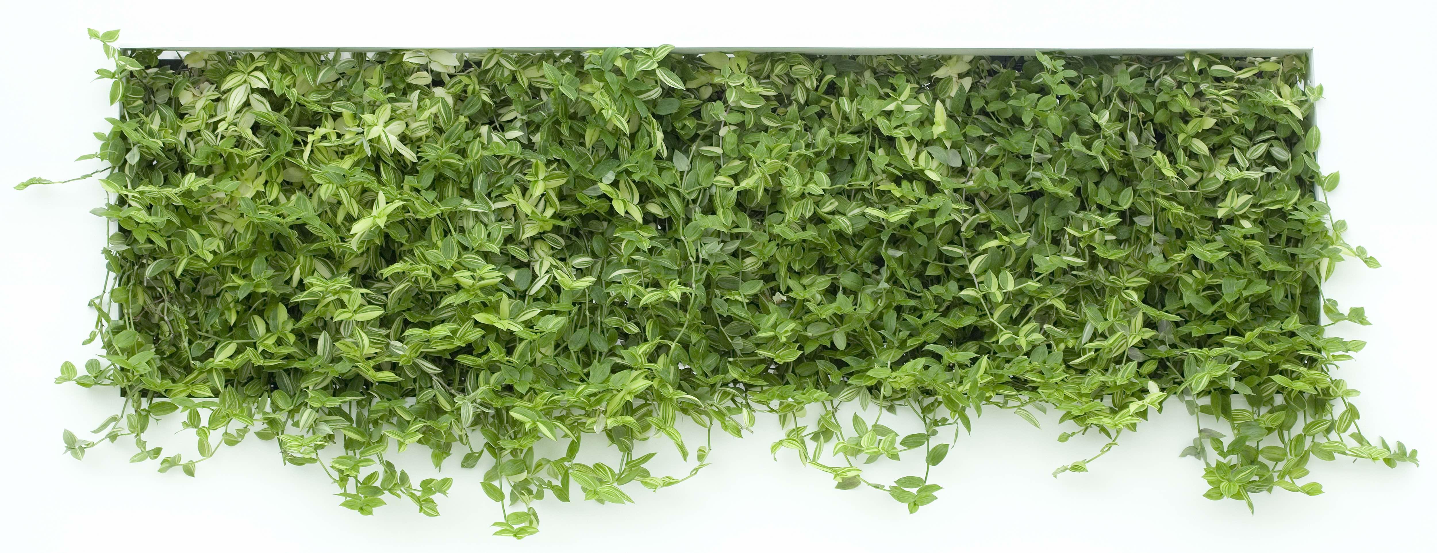 Als je zelfgemaakte plantenbak klaar is vul je hem met potgrond en je favoriete planten Houd er rekening mee dat de bak – afhankelijk van de grootte