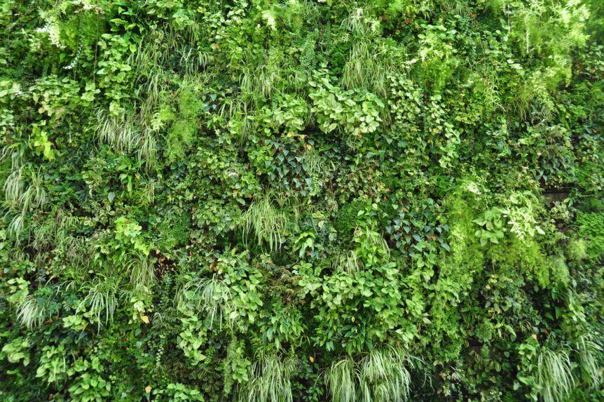 Verticale tuin zo maak je een verticale tuin binnen of buiten
