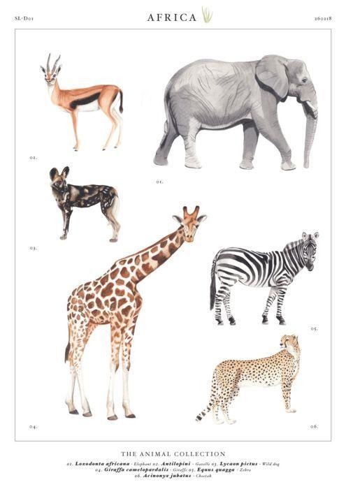 poster Afrikaanse dieren