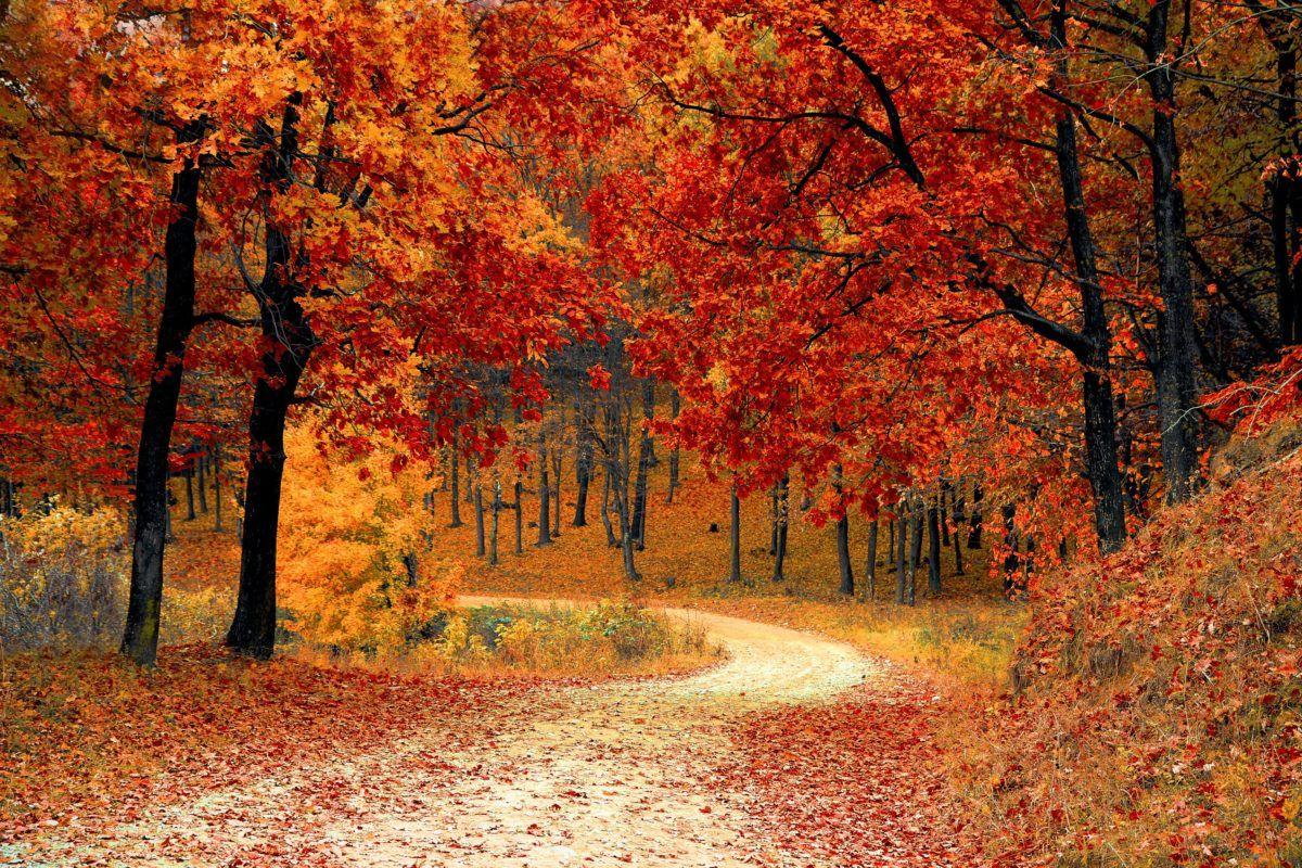 tips voor herfst in je huis
