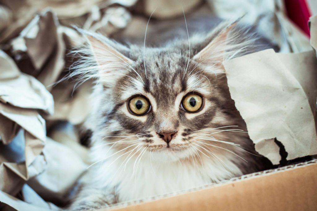 Urinelucht katten verwijderen